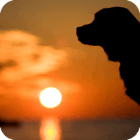 how to euthanize a dog with tylenol pm